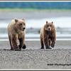 MG8032015- Bears (253)
