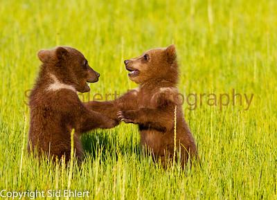 Bears 2011-3673