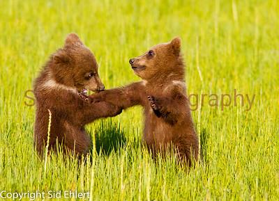Bears 2011-3674