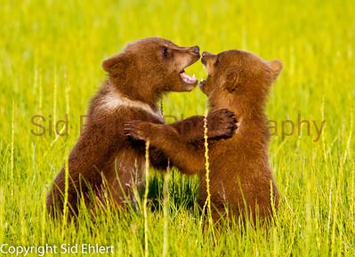 Bears 2011-3627