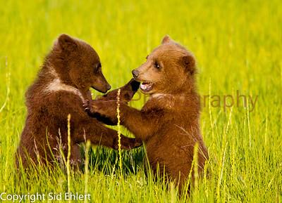 Bears 2011-3629