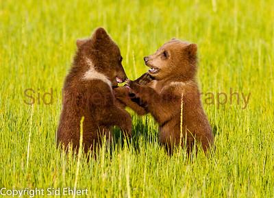 Bears 2011-3668