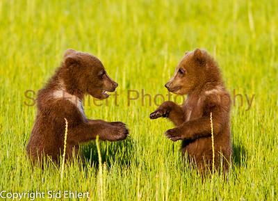 Bears 2011-3675