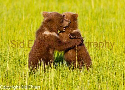 Bears 2011-3676