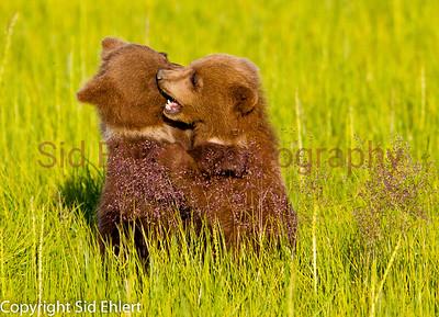 Bears 2011-3632