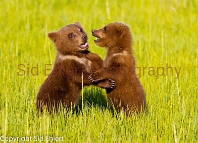 Bears 2011-3678