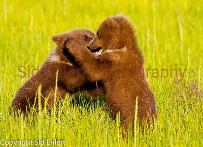 Bears 2011-3630