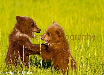 Bears 2011-3628