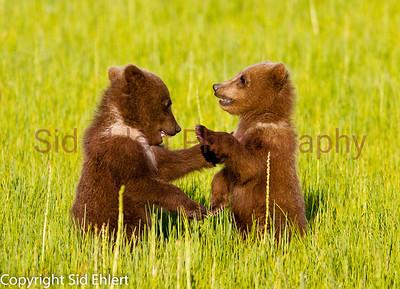 Bears 2011-3669
