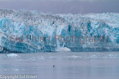 Hubbard Glacier AK 2011-2000