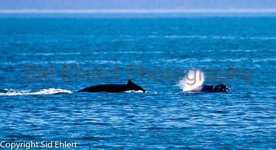 Icy Strait Alaska 2011-0783
