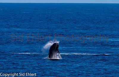 Marine Mammals 2011-0348