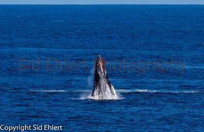 Marine Mammals 2011-0344