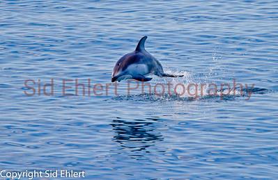 Marine Mammals 2011-0419