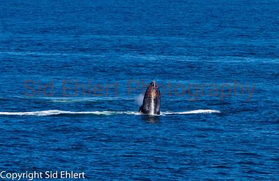 Marine Mammals 2011-0357