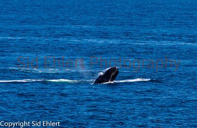 Marine Mammals 2011-0360