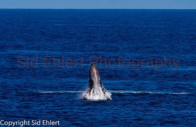 Marine Mammals 2011-0341