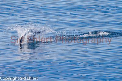 Marine Mammals 2011-0422