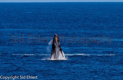Marine Mammals 2011-0345