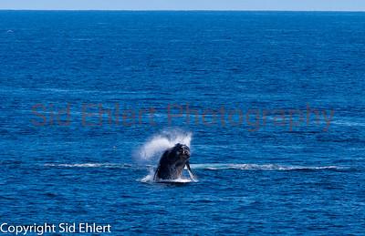 Marine Mammals 2011-0349