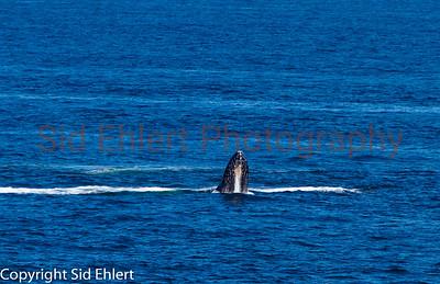 Marine Mammals 2011-0355