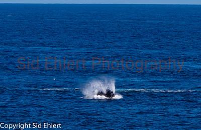 Marine Mammals 2011-0351