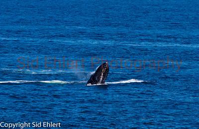 Marine Mammals 2011-0359