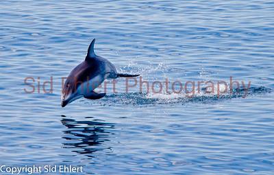 Marine Mammals 2011-0420
