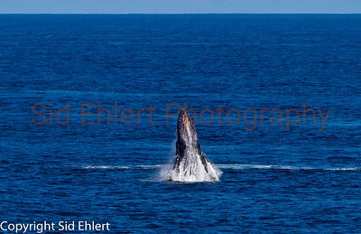 Marine Mammals 2011-0342