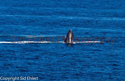 Marine Mammals 2011-0356