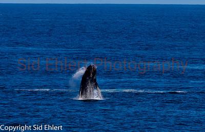 Marine Mammals 2011-0347