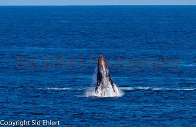 Marine Mammals 2011-0343