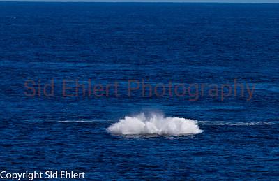 Marine Mammals 2011-0352