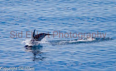 Marine Mammals 2011-0421