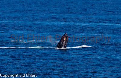 Marine Mammals 2011-0358