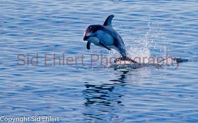 Marine Mammals 2011-0418