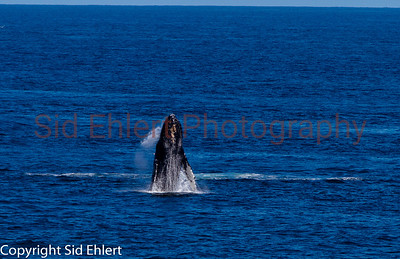 Marine Mammals 2011-0346