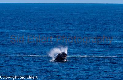 Marine Mammals 2011-0350