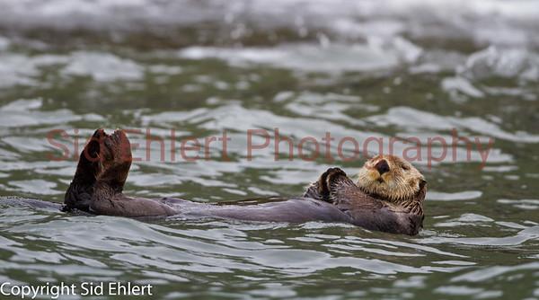 Puffin Rookery Alaska 2011-4015