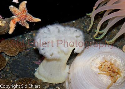 Seward SeaLife Center 2011-2226