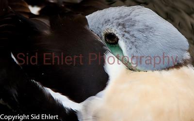Seward SeaLife Center 2011-2281