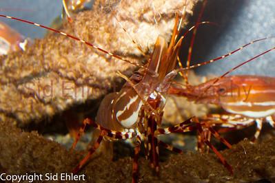 Seward SeaLife Center 2011-2208