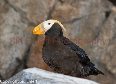 Seward SeaLife Center 2011-2328