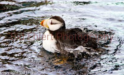 Seward SeaLife Center 2011-2257