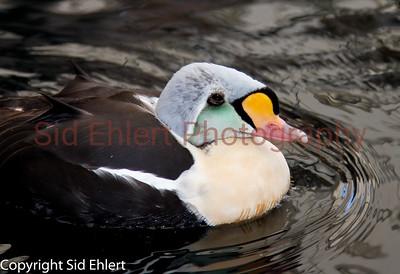 Seward SeaLife Center 2011-2269