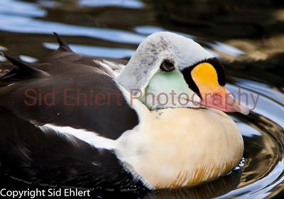 Seward SeaLife Center 2011-2272