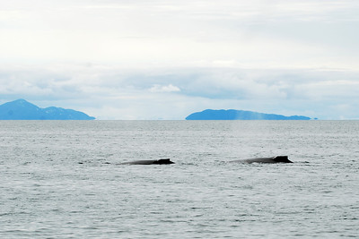 Catching sight of two whales in Prince William Sound