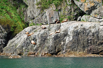 Sea lions, climbing the rocks to get higher