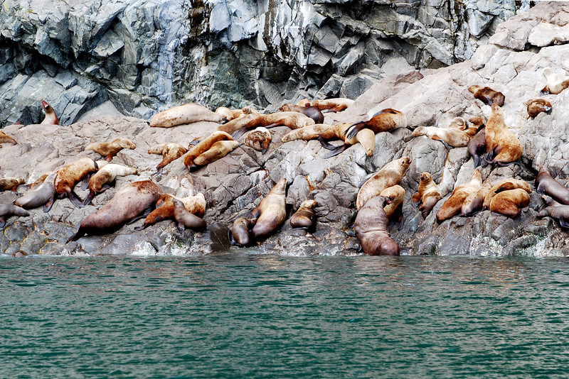 Sea lions, sunning themselves