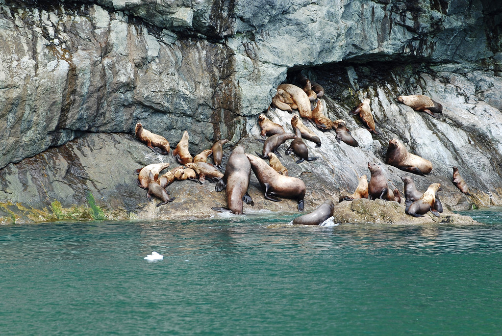 Sea lions - it amazed us how these animals were able to climb so high